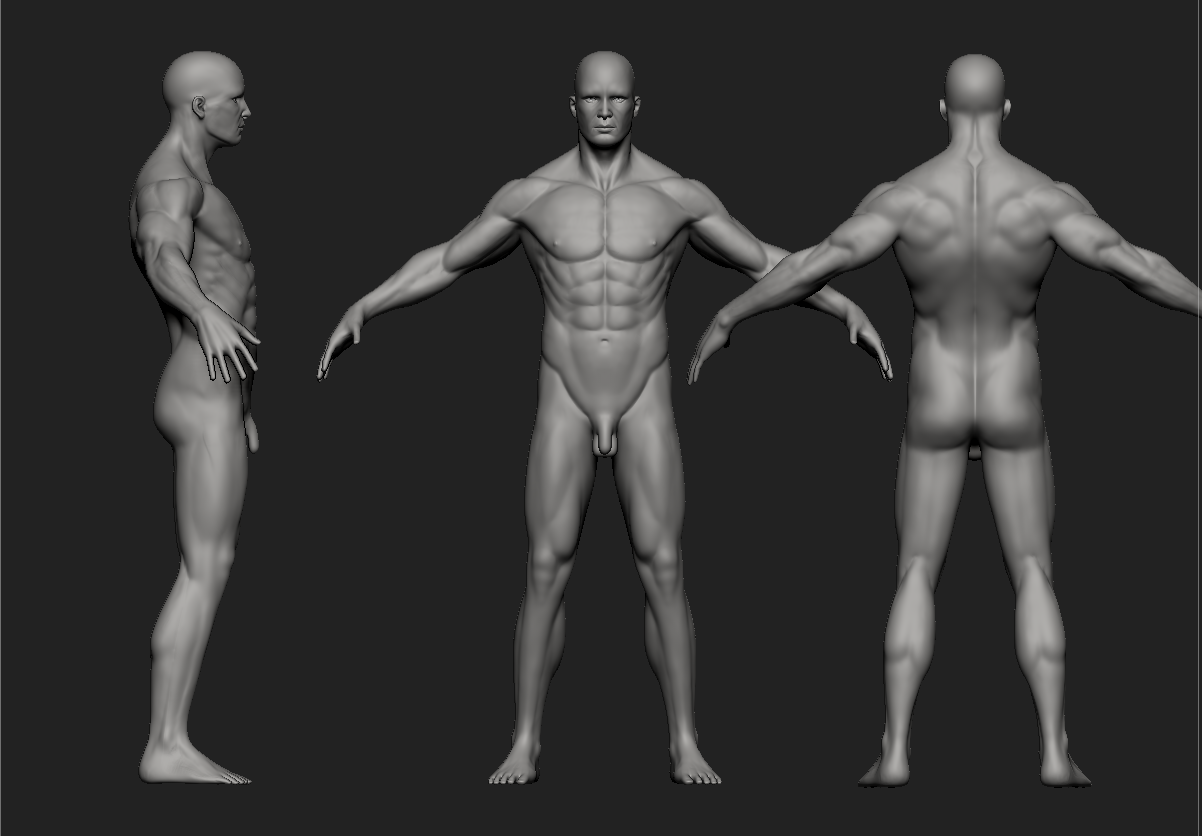 Male Character Anatomy - Art Critique - Forums - Cubebrush